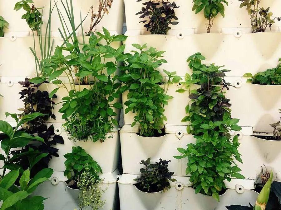 室内植物种植必备5方法,懒人秒懂小户型也适用,还有家居花草35张装修效果图