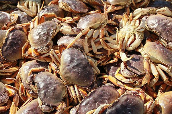 10种网上能买到的螃蟹种类盘点,除了大闸蟹、梭子蟹还能买到啥?