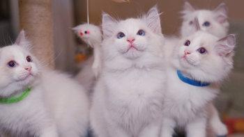 带上相机去记录生活 篇三:蚀人心骨欲罢不能的瘾——猫