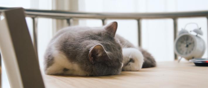 第一次养猫我该怎么办?我与小咪的经验(多图)分享