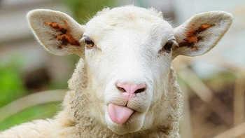 阿里系网购小羊毛不完全指南