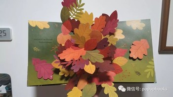 云看立体书 | Leaves An Autumn Pop-up Book
