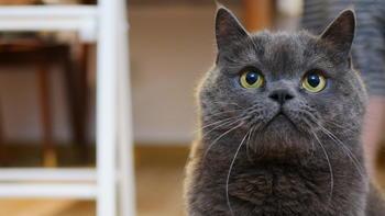 从一猫到多猫家庭:4年养猫经验分享