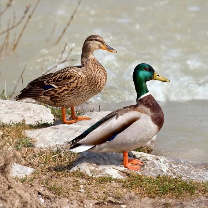 认遍了奥森的鸟,你就认识了中国五分之一的鸟种!