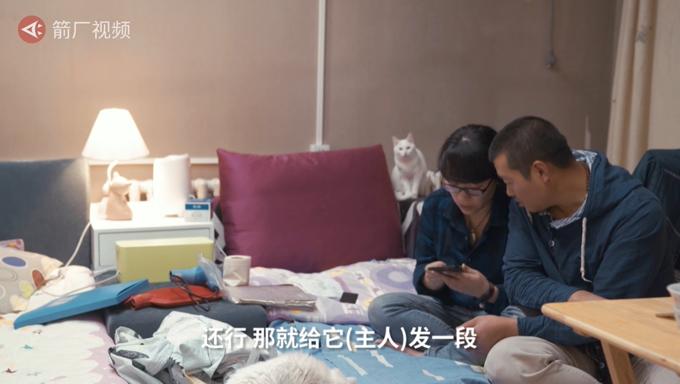 """北京姑娘每年春节都""""带薪""""撸猫,然而看完一天的生活后:太了不起的工作了!"""